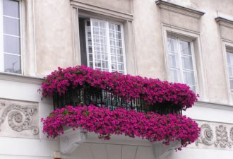 balkon-s-kvetinami