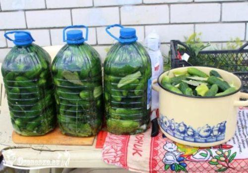 Огурцы-в-пластиковых-бутылках