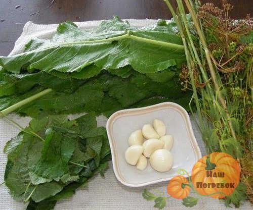 zasolochnaya-zelen-prigotovlennaya-dlya-pomidorov