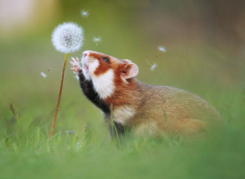 30 веселых фото дикой природы от знаменитого австрийского фотографа