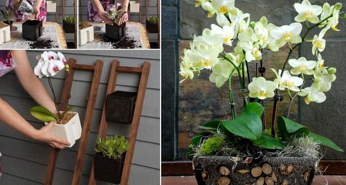 композиции из орхидей в стеклянных вазах