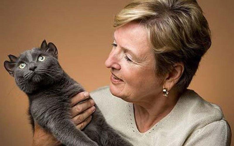Кот по имени Йода родился с лишней парой ушей