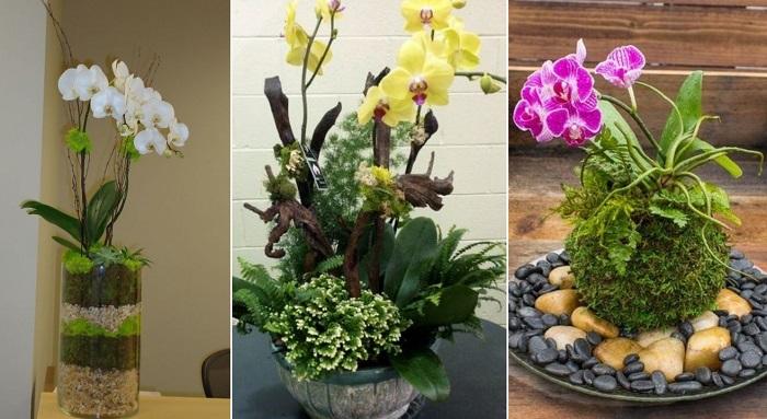 пересадка орхидей в домашних условиях