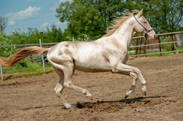 Подборка самых красивых лошадей на планете…