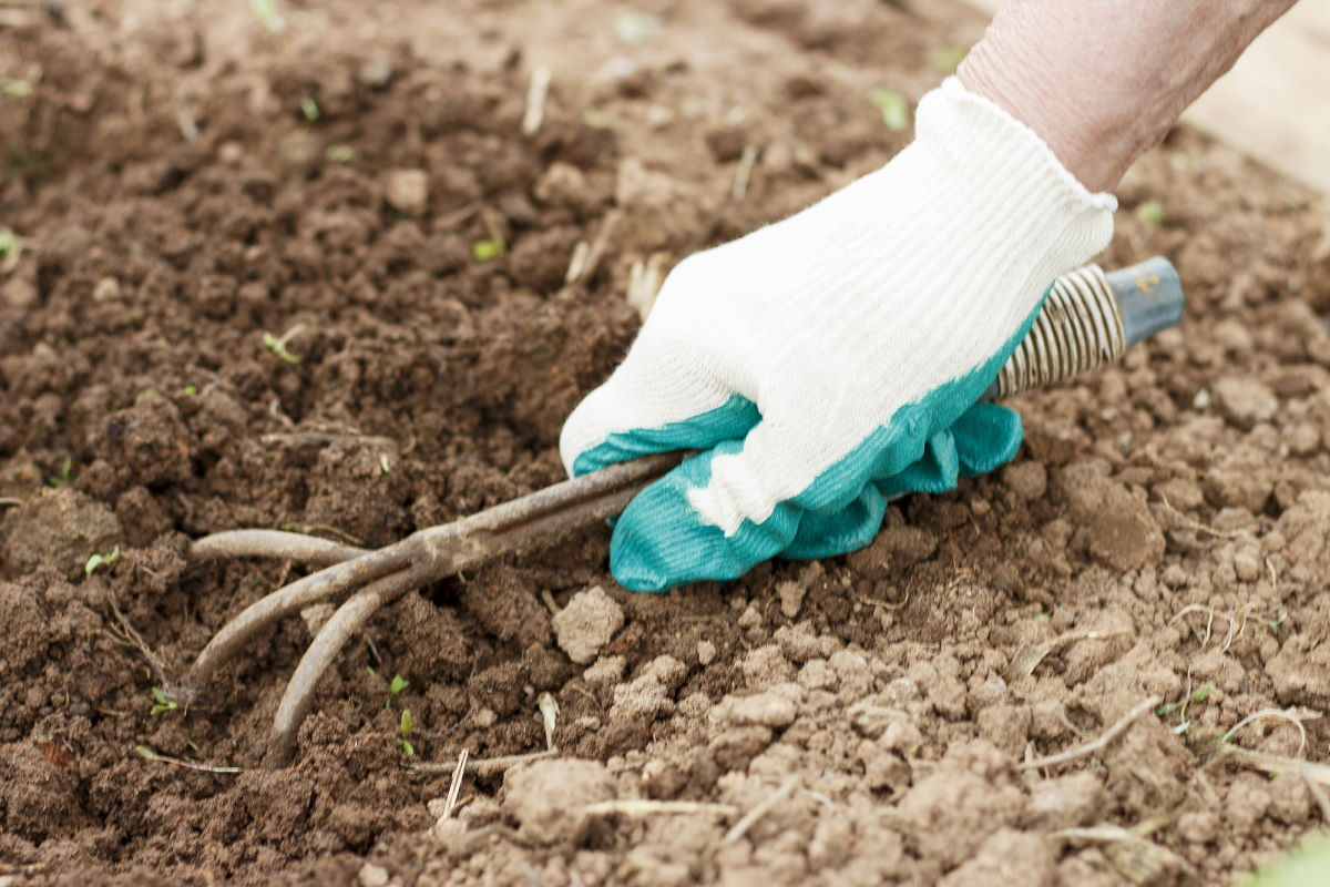 как ухаживать за кустами смородины