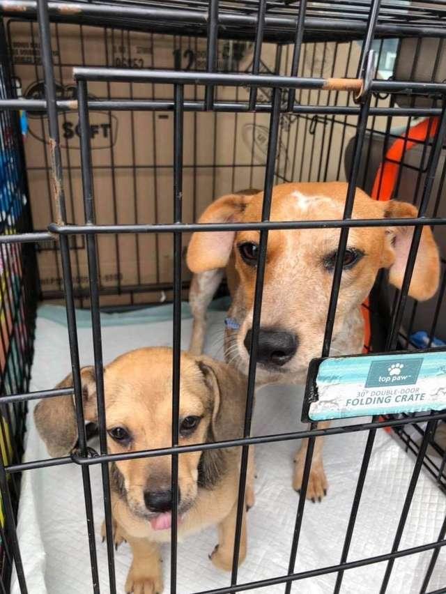 Маму и щенка доставили до пункта, где их забрала новая хозяйка. Наконец, теперь они в безопасности.