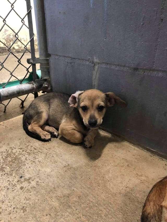 Мать-собака закрывала щенка собой, дрожа от страха в клетке приюта