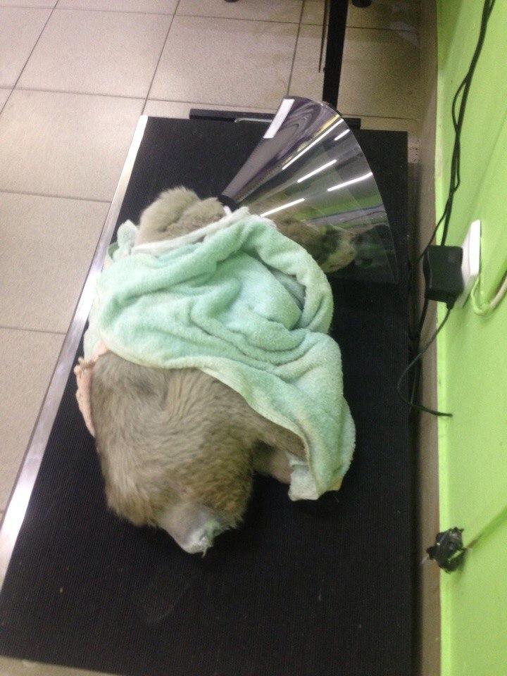 Плачущий щенок вернулся на свое место уже без хвоста